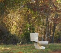 toilet-in-woods